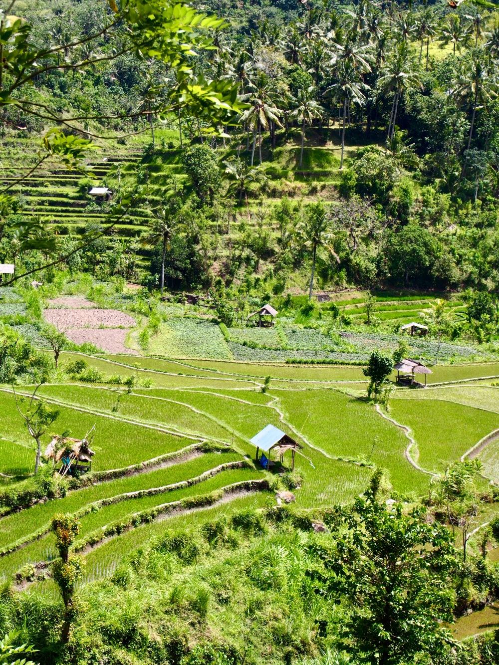 Bali Amed Rizière food-trotter