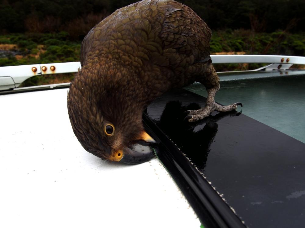 NZ_Teanau2_Fotor.jpg